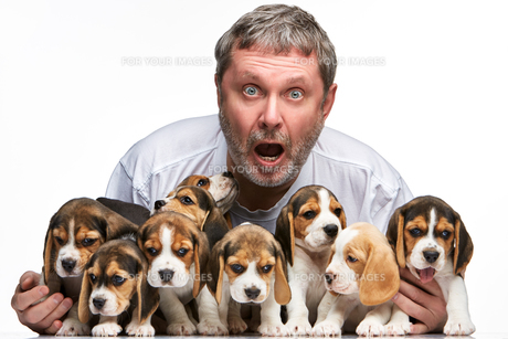 The man and big group of a beagle puppiesの写真素材 [FYI00647802]