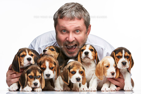 The man and big group of a beagle puppiesの写真素材 [FYI00647803]