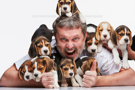 The man and big group of a beagle puppiesの写真素材 [FYI00647804]