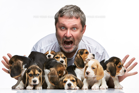 The man and big group of a beagle puppiesの写真素材 [FYI00647808]
