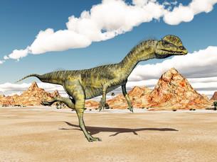 reptiles_amphibiansの写真素材 [FYI00647840]