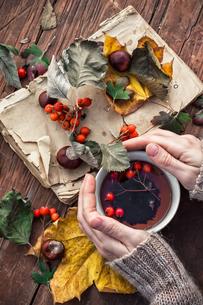 autumn leaf fallの写真素材 [FYI00648195]