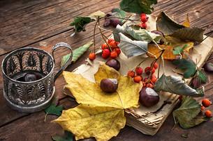 autumn leaf fallの写真素材 [FYI00648196]