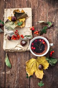 autumn leaf fallの写真素材 [FYI00648197]