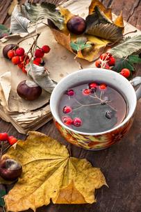 autumn leaf fallの写真素材 [FYI00648200]
