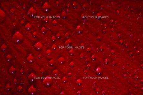 red textureの素材 [FYI00648321]
