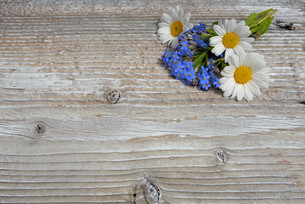 flowers on a white wooden boardの写真素材 [FYI00648361]