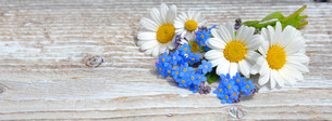 flowers on a white wooden boardの写真素材 [FYI00648362]