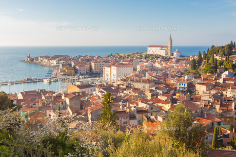 Picturesque old town Piran, Slovenia.の素材 [FYI00648583]