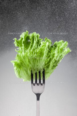 Green lettuce leaves on a forkの写真素材 [FYI00648626]