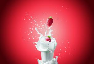 Strawberries falls in milkの写真素材 [FYI00648743]