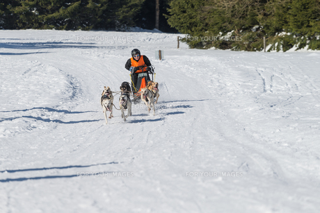 german championship sled dog race frauenwald 2015の素材 [FYI00648791]