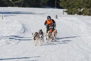 german championship sled dog race frauenwald 2015の素材 [FYI00648794]