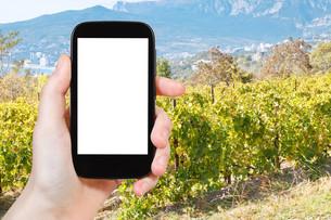 photo of vineyard in Massandra region of Crimeaの写真素材 [FYI00648951]