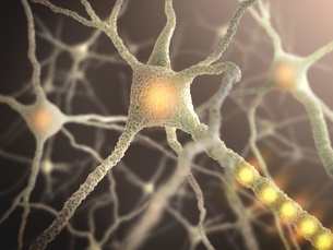 Nerve Cellの写真素材 [FYI00649785]