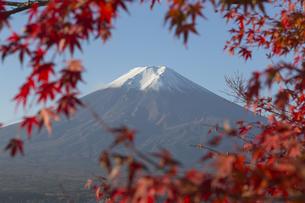 Mt.Fuji in autumn, Japanの写真素材 [FYI00650142]