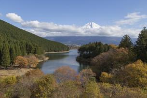 Mt.Fuji in autumn, Japanの写真素材 [FYI00650151]