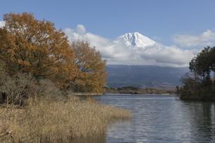 Mt.Fuji in autumn, Japanの写真素材 [FYI00650153]