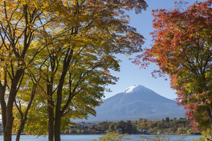 This photo was shot from the area around Mt.Fuji in Autumn. It is time to start snow cap on the top of Mt.Fuji and maple leaves change to autumn color. There are 5 lakes around Mt.Fuji.の写真素材 [FYI00650156]