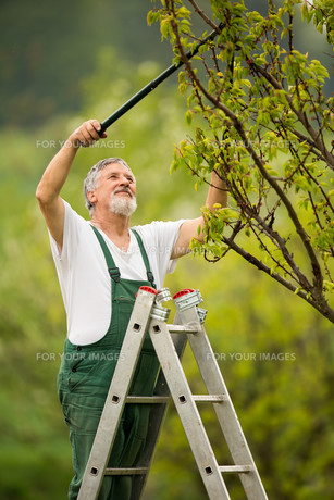 portrait of a senior man gardening in his garden (color toned image)の写真素材 [FYI00650202]