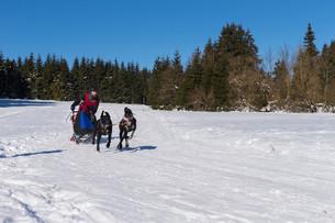 german championship sled dog race frauenwald 2015の素材 [FYI00650294]