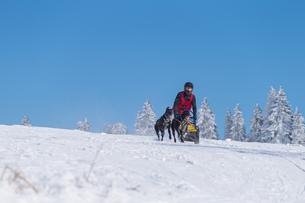 german championship sled dog race frauenwald 2015の素材 [FYI00650296]