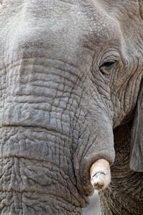big african elephants on Etosha national parkの写真素材 [FYI00650566]