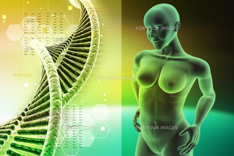 human anatomyの写真素材 [FYI00650809]