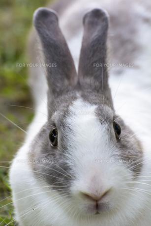 Rabbitの写真素材 [FYI00651560]