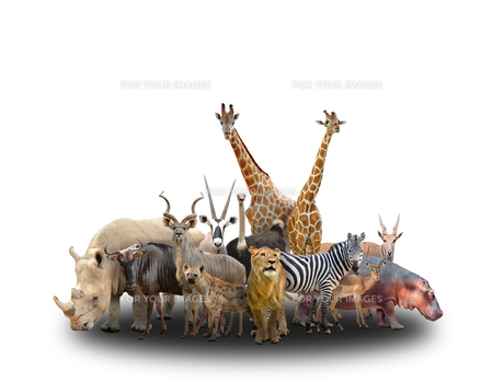 group of africa animalsの写真素材 [FYI00651616]