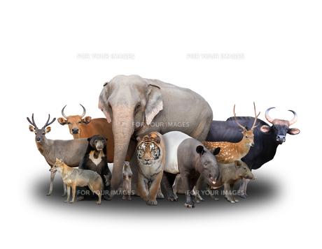 group of asia animalsの写真素材 [FYI00651617]
