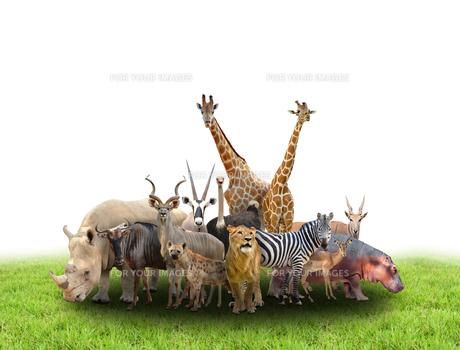 group of africa animalsの写真素材 [FYI00651618]