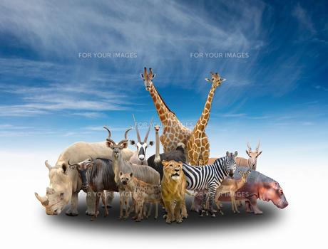 group of africa animalsの写真素材 [FYI00651621]