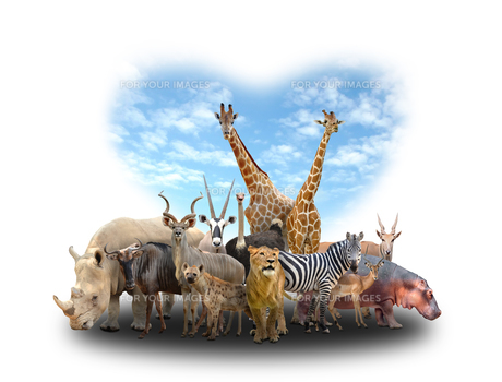 group of africa animalsの写真素材 [FYI00651622]