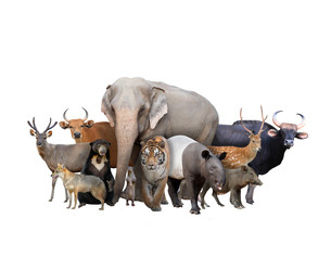 group of asia animalsの写真素材 [FYI00651623]