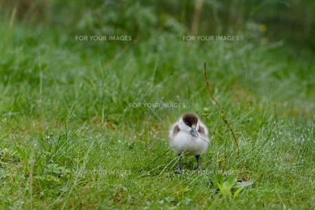 birdsの写真素材 [FYI00652481]