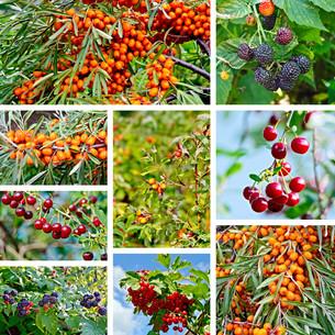 Berries ripe setの写真素材 [FYI00652637]