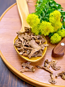 Root dry of Rhodiola rosea with knife on boardの写真素材 [FYI00652655]