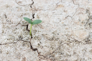 seed growth on crevice  soil spring season comingの写真素材 [FYI00652773]