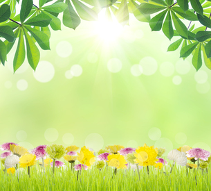beauty green leaf and flower on grass spring season backgroundの写真素材 [FYI00652780]