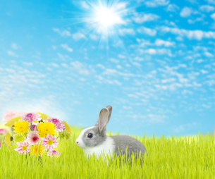 cute rabbit and beauty flower spring season backgroundの写真素材 [FYI00652805]