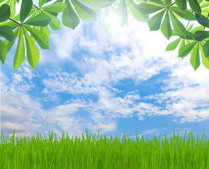 beauty green leaf and grass spring season backgroundの写真素材 [FYI00652811]