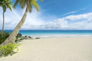 Empty tropical beachの写真素材 [FYI00652822]