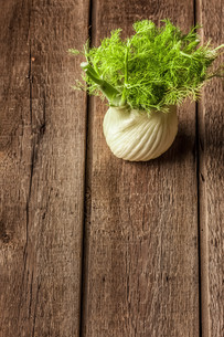 fresh fennel full of vitamins and fibersの写真素材 [FYI00654063]
