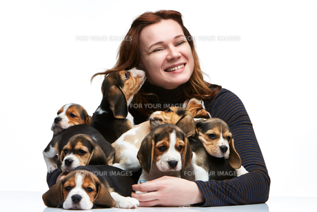 The woman and big group of a beagle puppiesの写真素材 [FYI00654299]