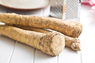 fresh horseradish rootの写真素材 [FYI00654530]