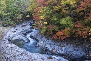 色づく中津川渓谷の写真素材 [FYI00655861]