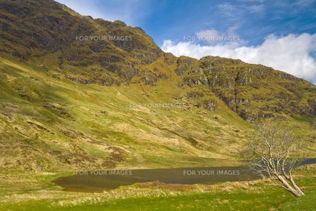 in the scottish highlandsの写真素材 [FYI00656714]