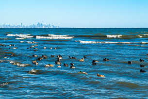 Waves breaking on lake with ducks floating nearby and city in distance.の素材 [FYI00656735]