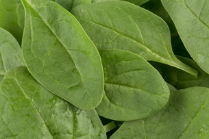 Green spinach as a backgroundの写真素材 [FYI00657022]